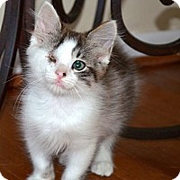 Adopt A Pet :: Will - Xenia, OH