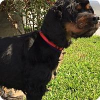 Adopt A Pet :: Heidi - Sugarland, TX