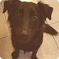 Adopt A Pet :: Theresa aka Ellie - Gainesville, FL