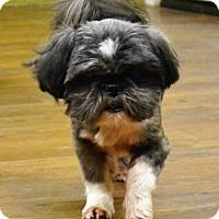 Adopt A Pet :: Phearless - Lake Odessa, MI