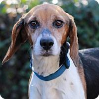 Adopt A Pet :: Whisper - Port Washington, NY
