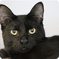 Adopt A Pet :: Fantasy - Lincoln, CA
