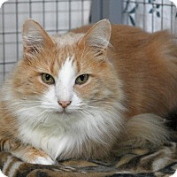 Adopt A Pet :: Colby - Winchendon, MA