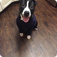 Adopt A Pet :: Casey Moran - Villa Park, IL