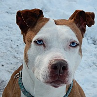 Adopt A Pet :: Lovely Lady - Long Beach, NY