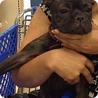 Adopt A Pet :: Zula - Columbus, OH