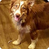 Adopt A Pet :: Rudy - Malakoff, TX