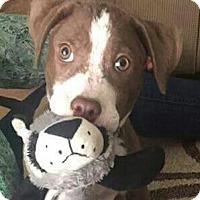 Adopt A Pet :: Finleigh - Wellesley, MA
