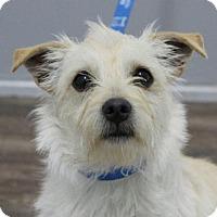 Adopt A Pet :: Taylor - Harrisonburg, VA