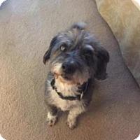 Adopt A Pet :: Hardy Boy - Spring, TX
