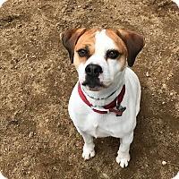 Adopt A Pet :: Jasper (Reactive to Strangers) - Freeport, ME