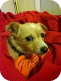 Terrier (Unknown Type, Small) Mix Dog for adoption in Shawnee Mission, Kansas - Buster