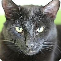 Adopt A Pet :: jager - El Cajon, CA
