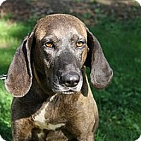Adopt A Pet :: Honey - Providence, RI