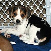 Adopt A Pet :: Davey - Minneola, FL