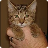 Adopt A Pet :: Sammi - Chesapeake, VA