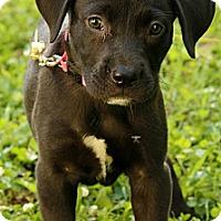 Adopt A Pet :: Keely - Staunton, VA