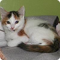 Adopt A Pet :: Tabasco - Dover, OH