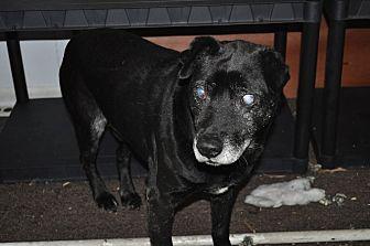 Labrador Retriever Dog for adoption in Hardeeville, South Carolina - Smokey