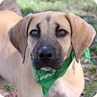 Adopt A Pet :: Willis - Loxahatchee, FL