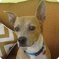 Adopt A Pet :: Zultan - Miami, FL