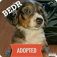Adopt A Pet :: Sheyenne - Regina, SK