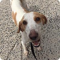 Adopt A Pet :: GRETEL - Cliffside Park, NJ