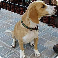 Adopt A Pet :: Molly - Palm Bay, FL