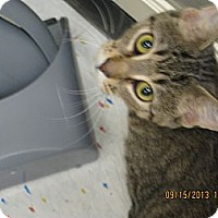 Adopt A Pet :: Kingston - West Dundee, IL