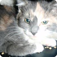 Adopt A Pet :: Tinkerbelle - Pasadena, CA