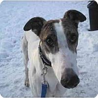 Adopt A Pet :: Coors (Coorsforthewin) - Chagrin Falls, OH