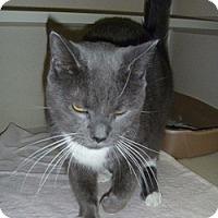 Adopt A Pet :: Kiki - Hamburg, NY