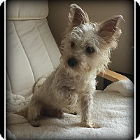Adopt A Pet :: Gizzy - Indian Trail, NC