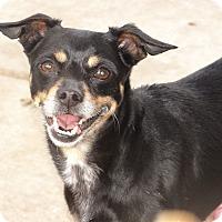 Adopt A Pet :: BUBBLES - Inland Empire, CA