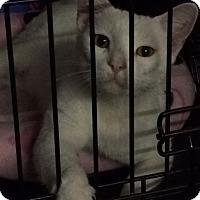 Adopt A Pet :: Vega - Byron Center, MI