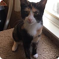 Adopt A Pet :: Lexie - Colmar, PA