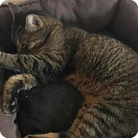 Adopt A Pet :: Miss Boca - Boca Raton, FL