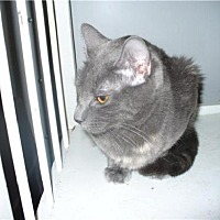 Adopt A Pet :: Twilight - Maryville, TN