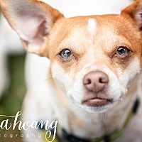 Adopt A Pet :: Mr Wiggles - Arlington, TX