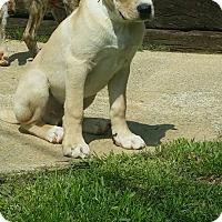 Adopt A Pet :: Charming - Hamilton, ON