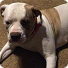 Adopt A Pet :: Morgan (COURTESY POST)