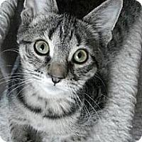 Adopt A Pet :: Nick - Grand Rapids, MI