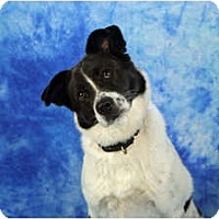 Adopt A Pet :: Davis - Ft. Myers, FL