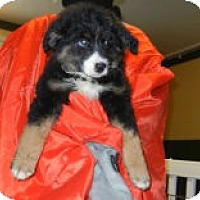 Adopt A Pet :: Lucerne - Antioch, IL