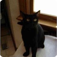 Adopt A Pet :: Mady - Richmond, VA