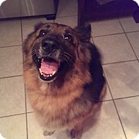 Adopt A Pet :: Misty - Green Cove Springs, FL