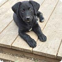 Adopt A Pet :: Sonora - Evergreen, CO