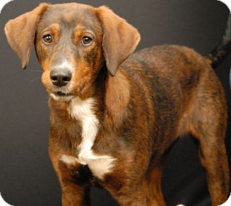 Shepherd (Unknown Type) Mix Dog for adoption in Newland, North Carolina - Yams