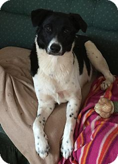 Border Collie Mix Puppy for adoption in Parker Ford, Pennsylvania - Waif-ADOPTION PENDING