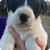 Adopt A Pet :: Cash - Hartford, CT
